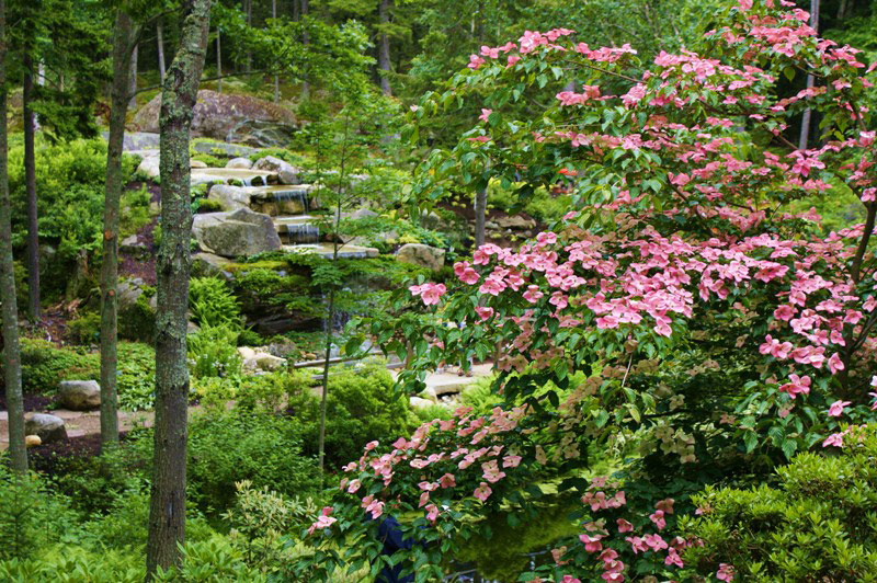 Our Favorite Gardens At Home Afield